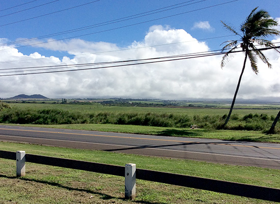 End of sugar on Maui : We do not know what change will come to this scenery in ten years. Picture taken from the park.